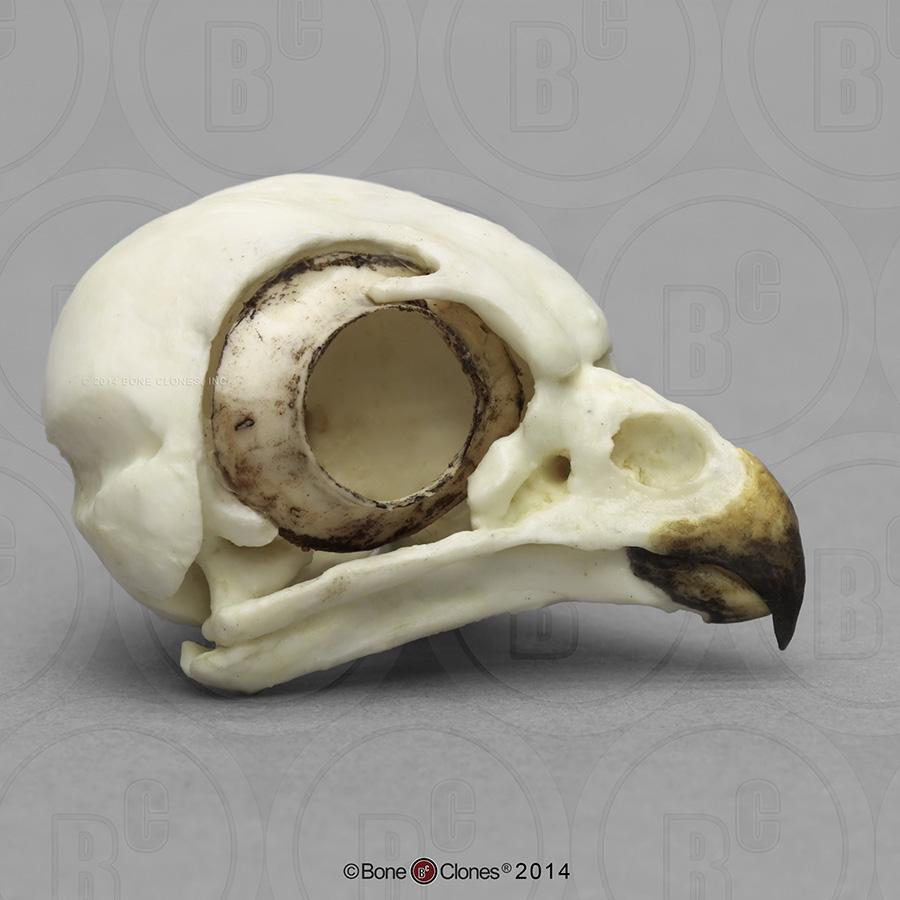 1000+ ideas about Owl Skull Tattoos on Pinterest | Skull ... - photo#26