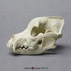 http://www.boneclones.com/images/bc-186-md.jpg
