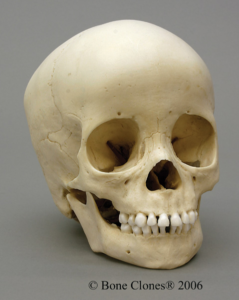 casey anthony trial pictures of skull. pictures Casey Anthony Trial: