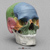 Human Female European 7 piece Color-Coded Study Skull