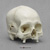 Human Male Skull, Leishmaniasis BCH-807