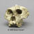 Australopithecus robustus Skull without lower jaw