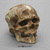 Cro-Magnon-1 Skull and Jaw