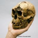 Homo floresiensis Skull (Flores Skull LB1) BH-033