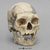 H. sapiens Oase Skull With Reconstruction BH-049