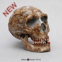 Homo neanderthalensis Shanidar 1 Skull BH-050