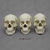 Human Female Skulls: African, Asian, and European COMP-122-SET