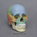 Magnetic Osteological Teaching Skull, 22-piece, color EZ-001