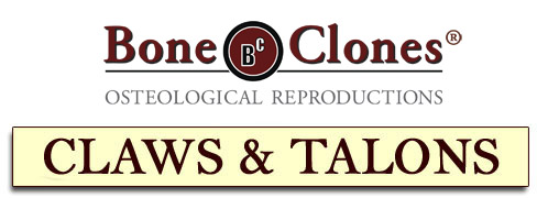 Bone Clones® Catalog of Claws and Talons