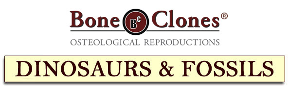 Bone Clones® Dinosaur and Fossil Catalog