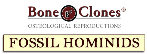 Bone Clones® Catalog of Fossil Hominids