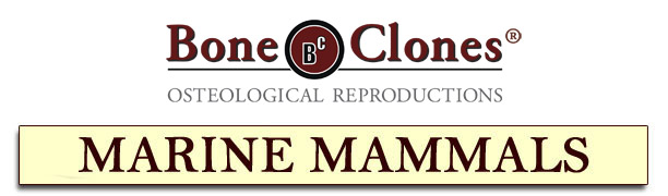 Bone Clones® Catalog of Marine Mammals