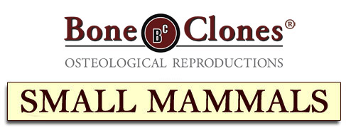 Bone Clones® Small Mammal Catalog
