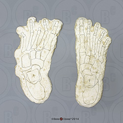 Bigfoot Pair of Footprints, Impressions and Reconstructions by Dr. Grover Krantz