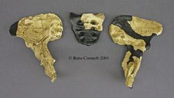 Australopithecus africanus Mrs. Ples Pelvis and Sacrum KO-195-PD