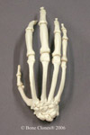 Chimpanzee Hand Articulated