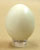 Rock Dove Egg