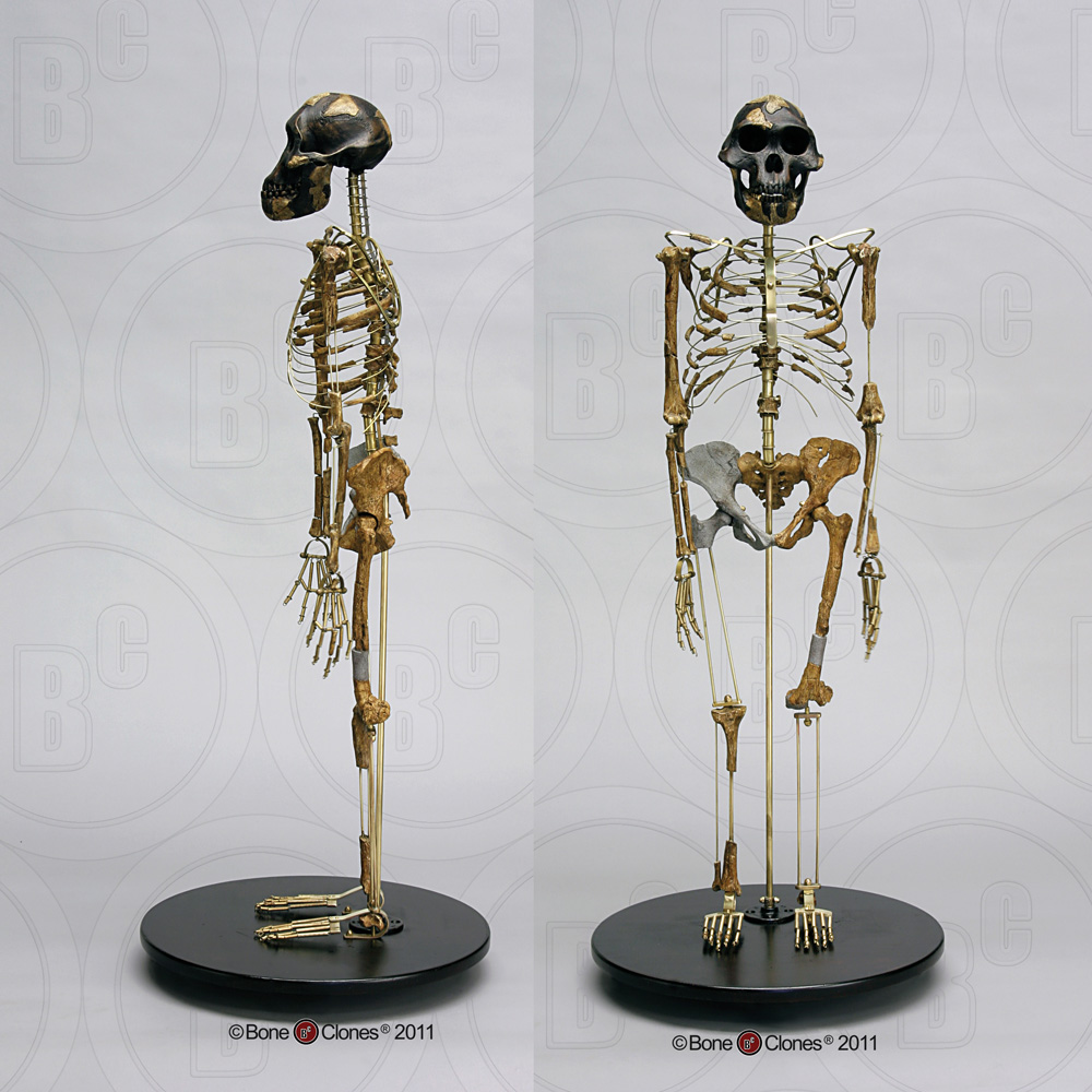 http://www.boneclones.com/images/sc-036-a-lg.jpg
