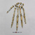 Ardipithecus ramidus Disarticulated Hand