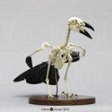 Articulated Raven Skeleton SC-074-A