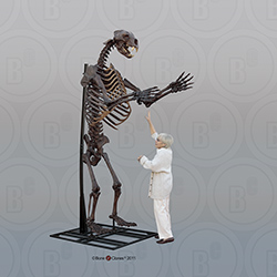 Articulated Short-faced Bear Skeleton SC-114-A