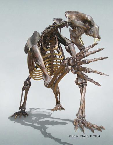 http://www.boneclones.com/images/sc-114b_web-lg.jpg