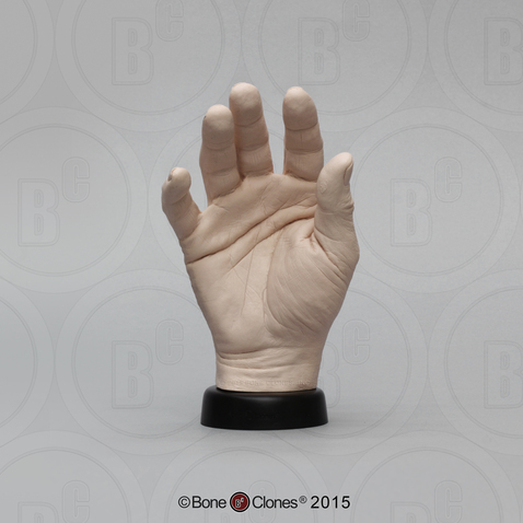 Human Hand, male, right (Life cast)