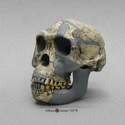 Homo habilis KNM-ER 1813 Sawyer/Deak Reconstruction