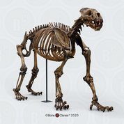 Articulated Xenosmilus Skeleton,