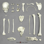 Male Bone Box Kit