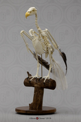 Articulated Bald Eagle Skeleton