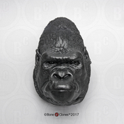 Male Gorilla Head (Life Cast)