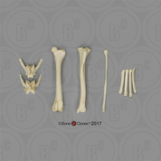 Large Dog Archaeology Set