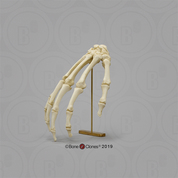 Human Hand in Resting Pose on Brass Stand