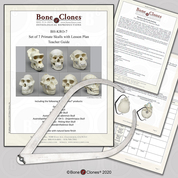 Hominid Evolution Lesson Plan with Calipers