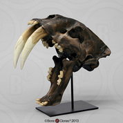 Sabertooth Cat, Smilodon Skull Replica Tarpit Finish