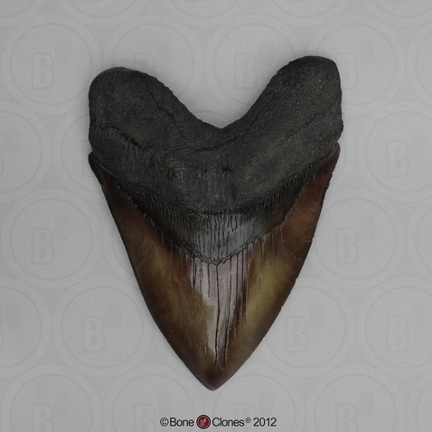 6 3/4 Inch Megalodon Shark Tooth (Replica)