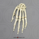 Human Male Asian Robust Hand, Articulated, Premium Flexible