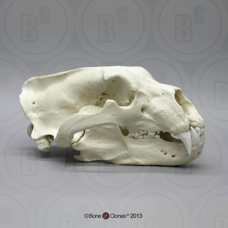 Build A Bear Us Site