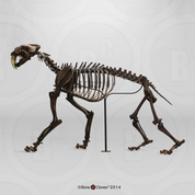 Sabertooth Cat Smilodon Articulated Skeleton, Tarpit Finish