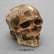 Cro-Magnon 1 Cranium and Jaw