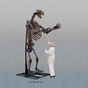 Short-faced Bear Articulated Upright Skeleton