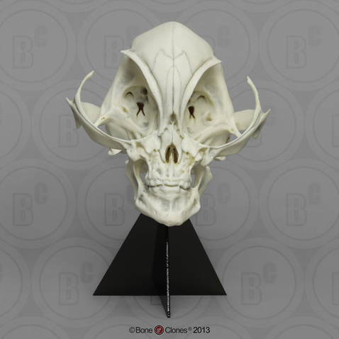 Alien Grey Skull Bone Clones Inc Osteological