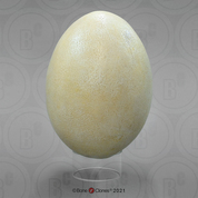 Fossil Giant Elephant Bird Egg