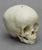 1 1/2-year-old Human Child Skull
