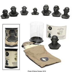 Set of 7 Sculpted Hominid Busts by Atelier Daynes