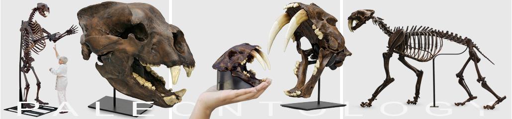 Bone Clones, Inc  - Osteological Reproductions