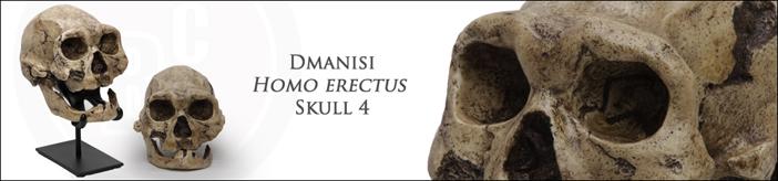 Dmanisi Skull 4