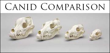 canid comparison set