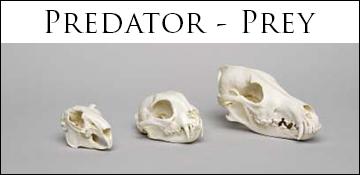 predator-prey comparison set